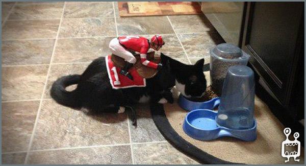 BigButtsLikeItBig Diamond Kitty Face Down Ass Up (Oct 14 ...