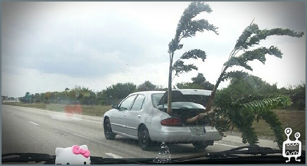 hurricanecar